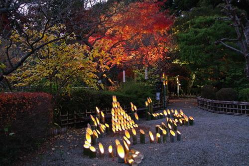 百草園ライトアップ2010-12