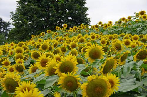 昭和記念公園201208-9