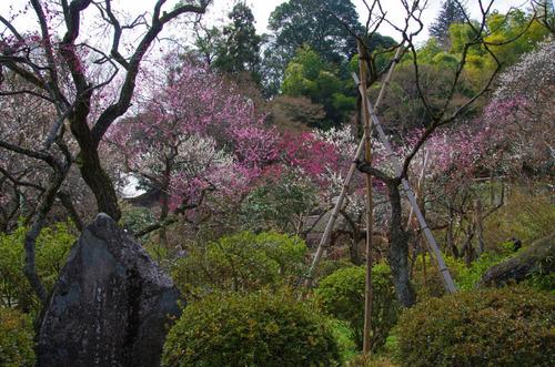 京王百草園201303-1