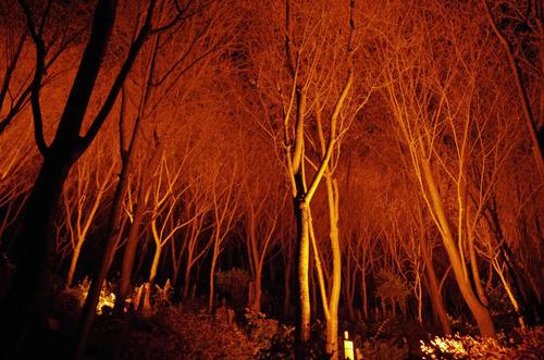京都清水寺201211-8