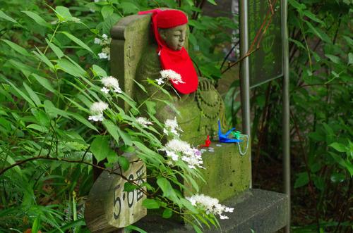 高幡不動尊あじさい祭り201106-11