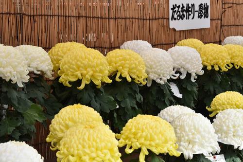 高幡不動尊201511-3