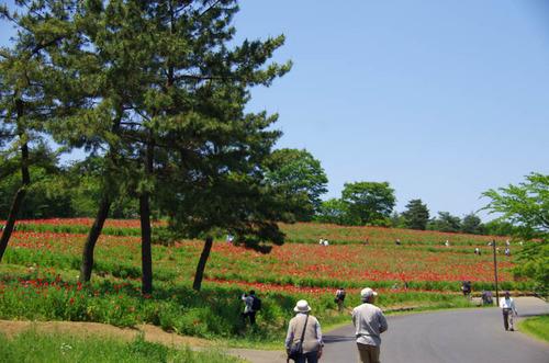 昭和記念公園201205-1