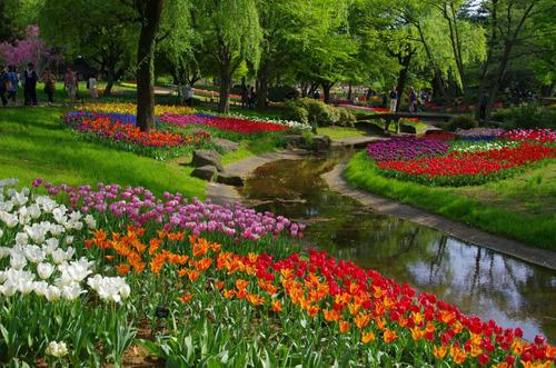 昭和記念公園201304-10