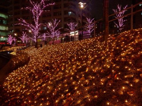 目黒川冬の桜201112-5