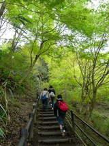 高尾山0420新緑の登山道