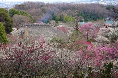京王百草園201503-6