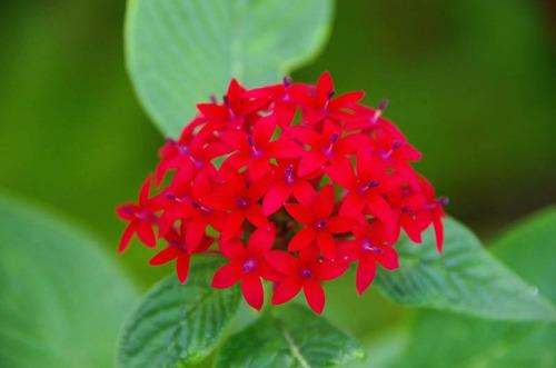 由布島の花201108-15