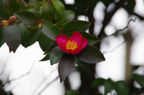 昭和記念公園201201-11