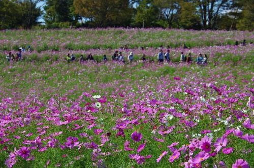 昭和記念公園201210-8