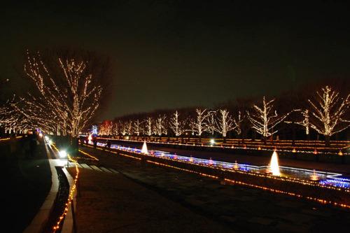 昭和記念公園イルミネーション-4
