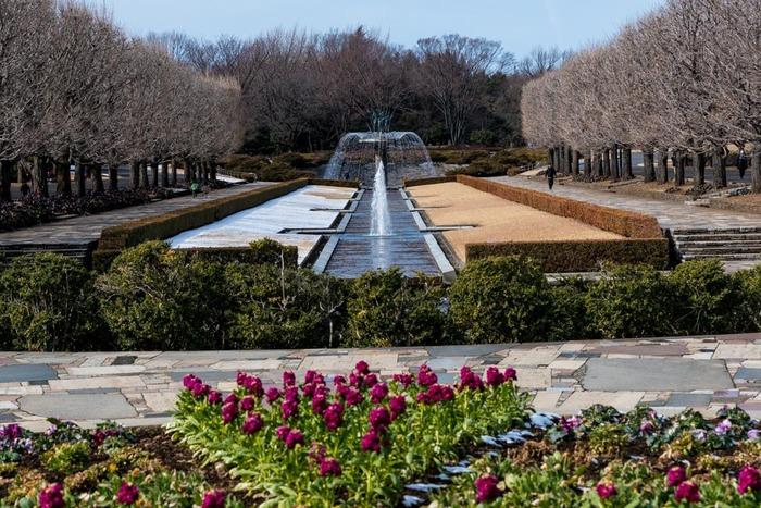 昭和記念公園201902
