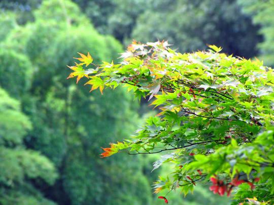 秋の空と光-8L
