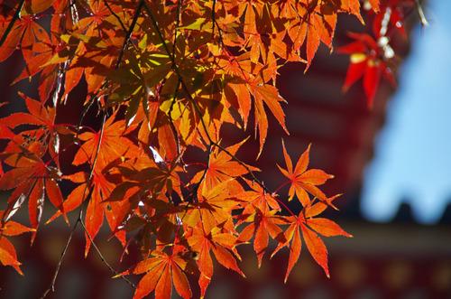 高幡不動201111-9