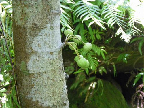西表島201108-5