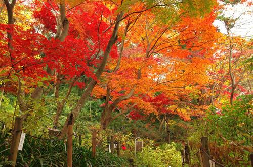 高幡不動201411-8
