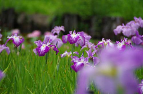 昭和記念公園201206-3