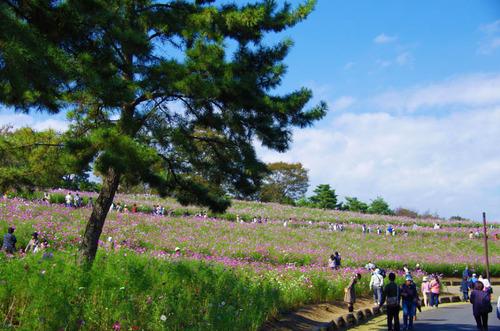 昭和記念公園201210-6