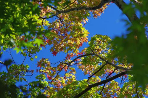 昭和記念公園201310-4