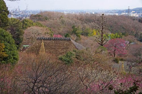 京王百草園20120303-11