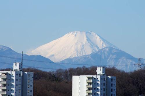 京王百草園201401-12