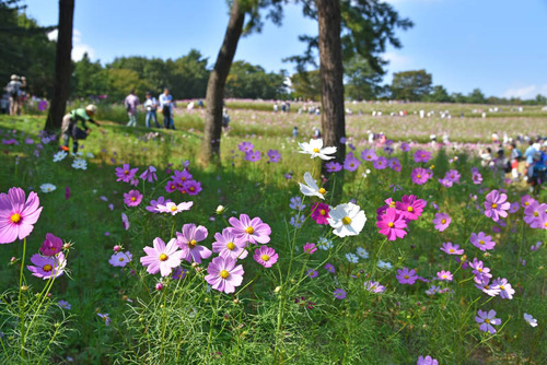 昭和記念公園201510-4