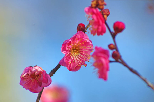 昭和記念公園201501-5