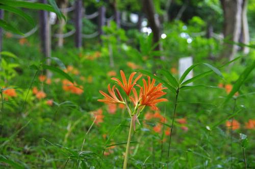 高幡不動尊20110828-2