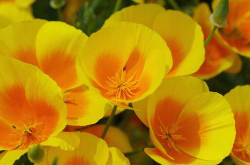 散歩道の花(5月)2012-10