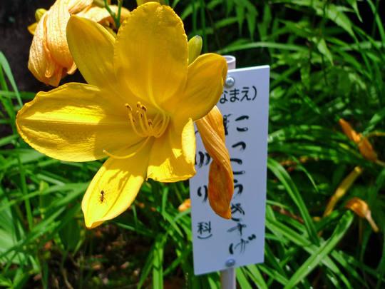 高幡不動尊090704-3