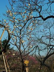 百草園梅祭090207-2