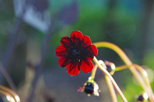 神代植物公園201210-12