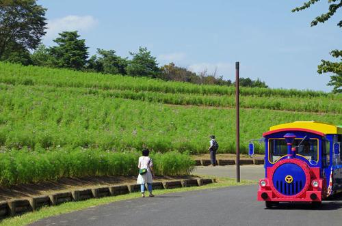 昭和記念公園201309-9