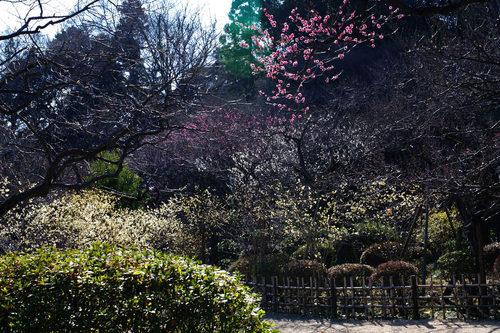 百草園20100130-8