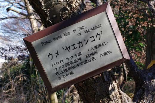 百草園200912-3