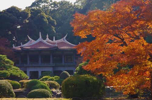 新宿御苑201312-13