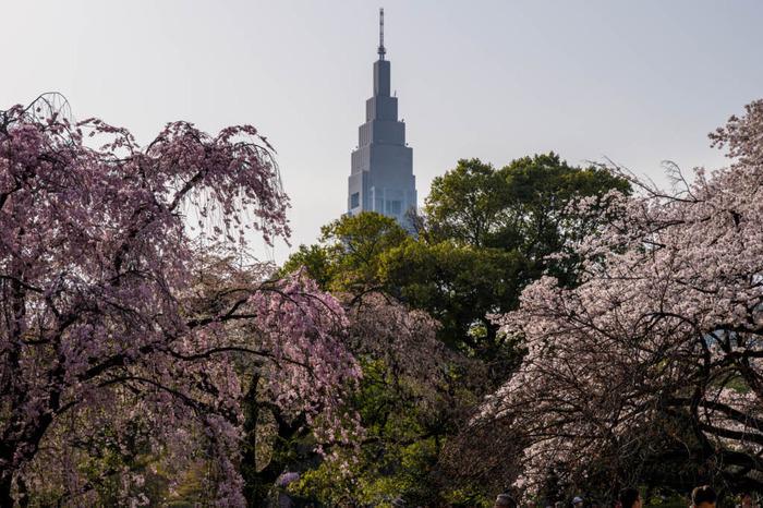 新宿御苑201803