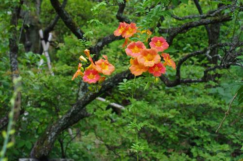 京王百草園201209-9