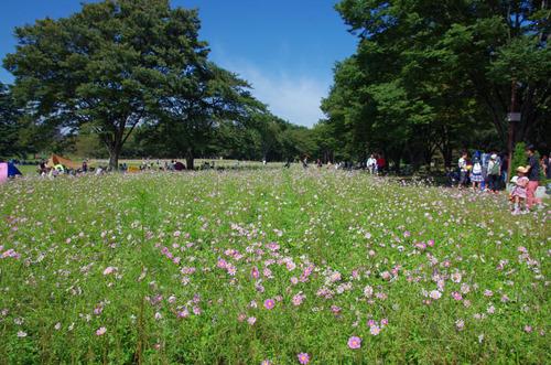 昭和記念公園201510-3