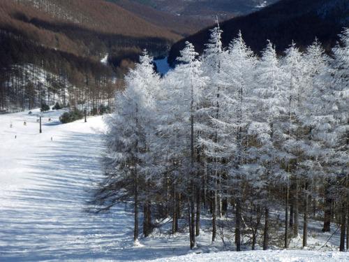 正月スキー2011-13