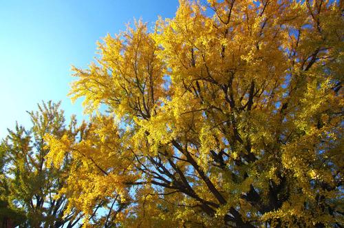 新宿御苑201312-14
