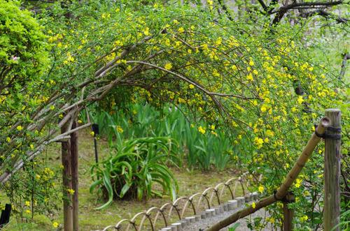 京王百草園201204-11