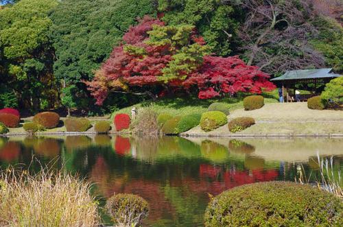 新宿御苑201312-10