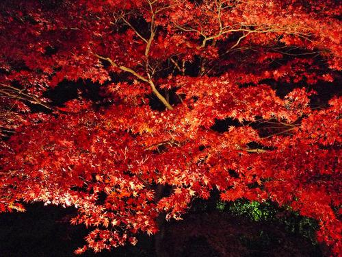 紅葉ライトアップ200911