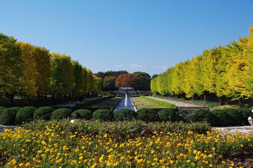 昭和記念公園201011-12