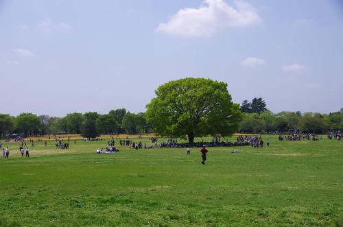 昭和記念公園20120428-1