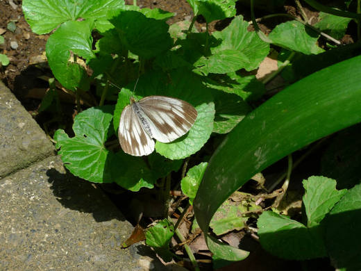 散歩で見つけた昆虫-6