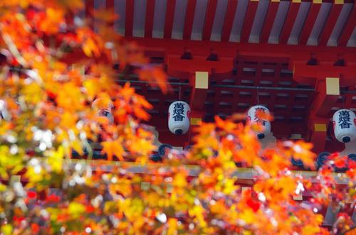 高幡不動201411-15