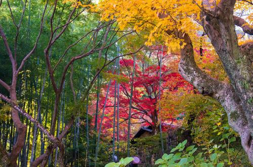 京王百草園201311-4