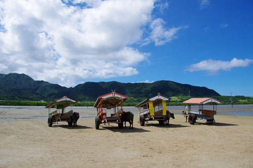 沖縄由布島2011-3